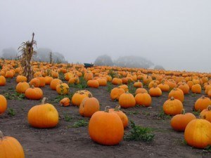 Sure! We have punkin patches in Texas. And we do see a morning or two where the mist hangs heavy in the air...